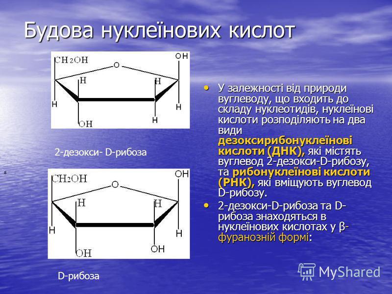 Будова нуклеїнових кислот У залежності від природи вуглеводу, що входить до складу нуклеотидів, нуклеїнові кислоти розподіляють на два види дезоксирибонуклеїнові кислоти (ДНК), які містять вуглевод 2-дезокси-D-рибозу, та рибонуклеїнові кислоти (РНК),