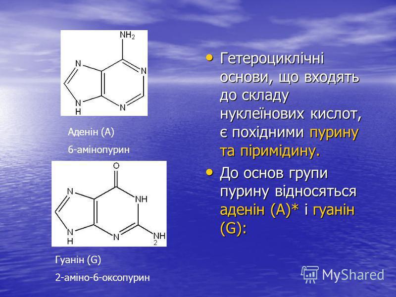 Гетероциклічні основи, що входять до складу нуклеїнових кислот, є похідними пурину та піримідину. Гетероциклічні основи, що входять до складу нуклеїнових кислот, є похідними пурину та піримідину. До основ групи пурину відносяться аденін (А)* і гуанін