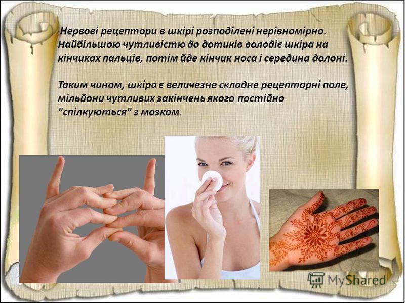 Нервові рецептори в шкірі розподілені нерівномірно. Найбільшою чутливістю до дотиків володіє шкіра на кінчиках пальців, потім йде кінчик носа і середина долоні. Таким чином, шкіра є величезне складне рецепторні поле, мільйони чутливих закінчень якого