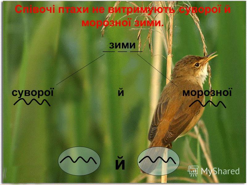 Співочі птахи не витримують суворої й морозної зими. зими суворої й морозної ____ ___ ____ й