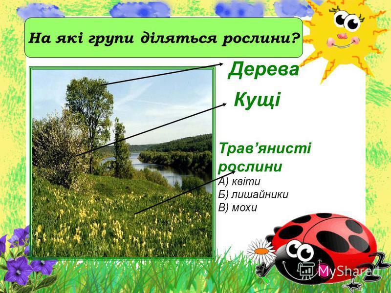 Дерева Кущі Травянисті рослини А) квіти Б) лишайники В) мохи На які групи діляться рослини?