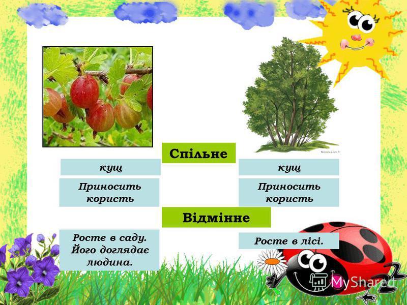 Спільне кущ Приносить користь Відмінне Росте в саду. Його доглядає людина. Росте в лісі.