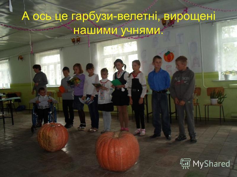 А ось це гарбузи-велетні, вирощені нашими учнями.
