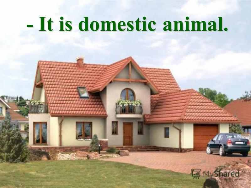 - It is domestic animal.