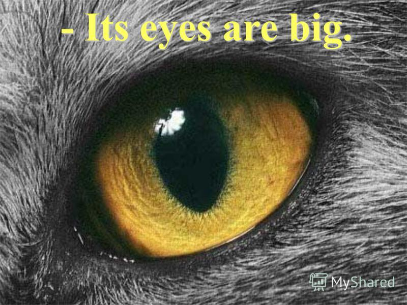 - Its eyes are big.