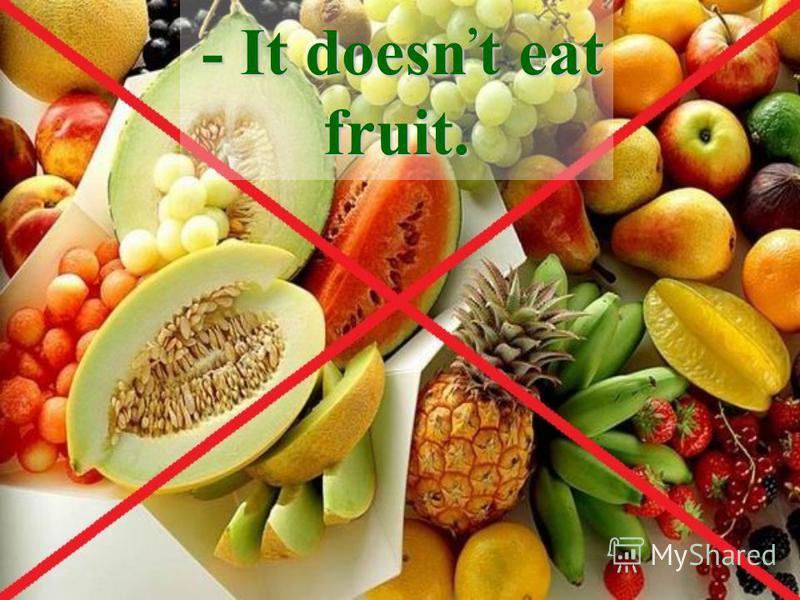 - It doesn, t eat fruit.