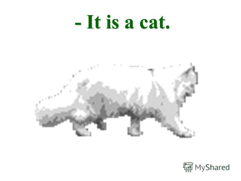 - It is a cat.