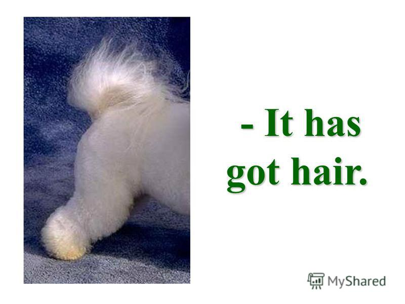 - It has got hair.
