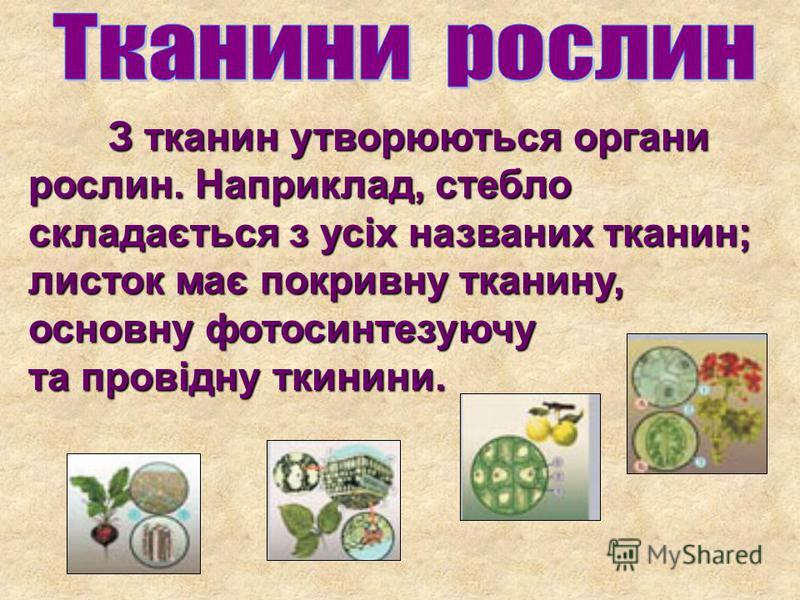 З тканин утворюються органи рослин. Наприклад, стебло складається з усіх названих тканин; листок має покривну тканину, основну фотосинтезуючу та провідну ткинини.