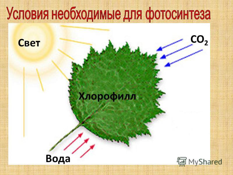 Свет СO2СO2 Вода Хлорофилл