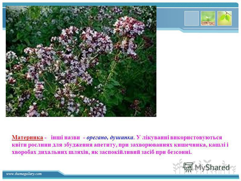www.themegallery.com Материнка - інші назви - орегано, душинка. У лікуванні використовуються квіти рослини для збудження апетиту, при захворюваннях кишечника, кашлі і хворобах дихальних шляхів, як заспокійливий засіб при безсонні.