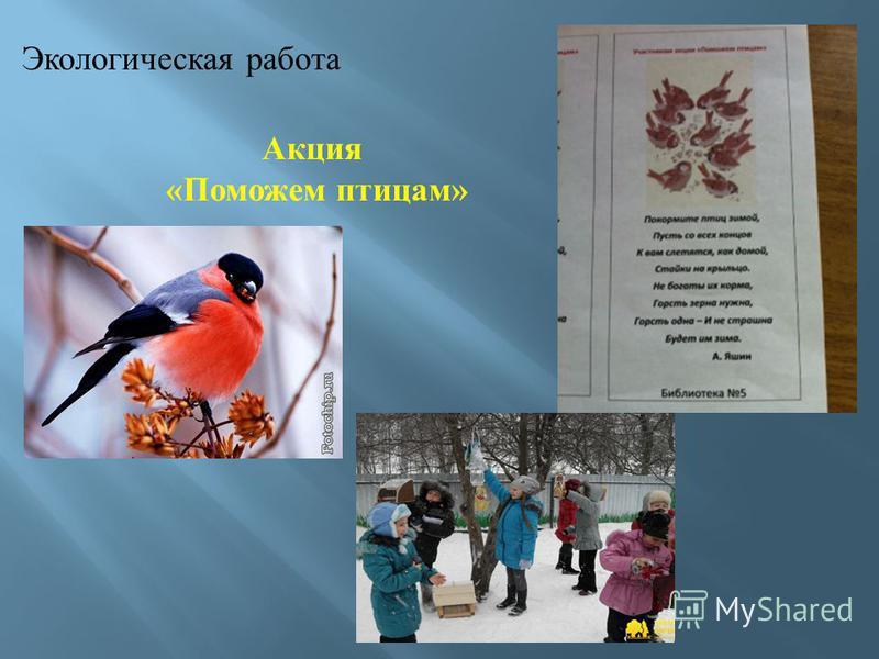 Акция «Поможем птицам»