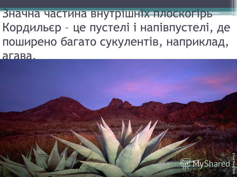 Значна частина внутрішніх плоскогірь Кордильєр – це пустелі і напівпустелі, де поширено багато сукулентів, наприклад, агава.