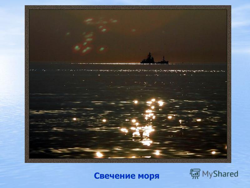 Одно из самых замечательных и поражающих наблюдателя явлений в Черном море – это его свечение. Происходит это обычно в августе. Оно вызывается мельчайшими организмами, главную роль среди которых играют жгутиковые ночесветки. Они похожи на маленькую и