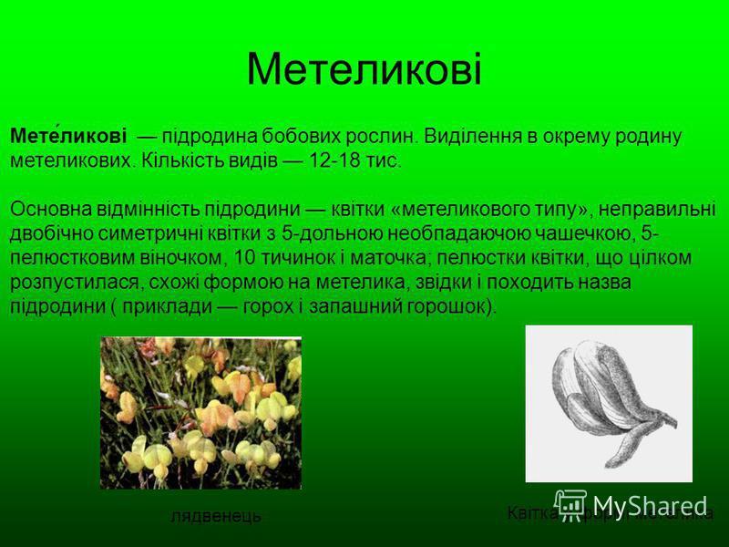 Метеликові Мете́ликові підродина бобових рослин. Виділення в окрему родину метеликових. Кількість видів 12-18 тис. Основна відмінність підродини квітки «метеликового типу», неправильні двобічно симетричні квітки з 5-дольною необпадаючою чашечкою, 5-