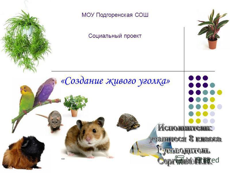 МОУ Подгоренская СОШ Социальный проект «Создание живого уголка»
