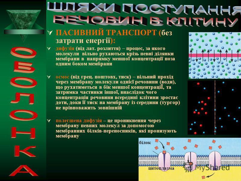 ЕНДОЦИТОЗ: Фагоцитоз (від грец. фагос – пожирати) – це активне захоплення твердих мікроскопічних обєктів (одноклітинні організми та клітини багатоклітинних тварин, наприклад травні клітини гідри, захоплюють їжу, а деякі спеціалізовані клітини багаток