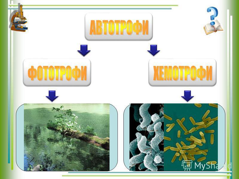фототрофи (енергія світла) і хемотрофи (енергія хімічних звязків) споживають, органічні речовини, синтезовані іншими організмами, але можуть використовувати і енергію світла споживають, органічні речовини, синтезовані іншими організмами, але можуть в