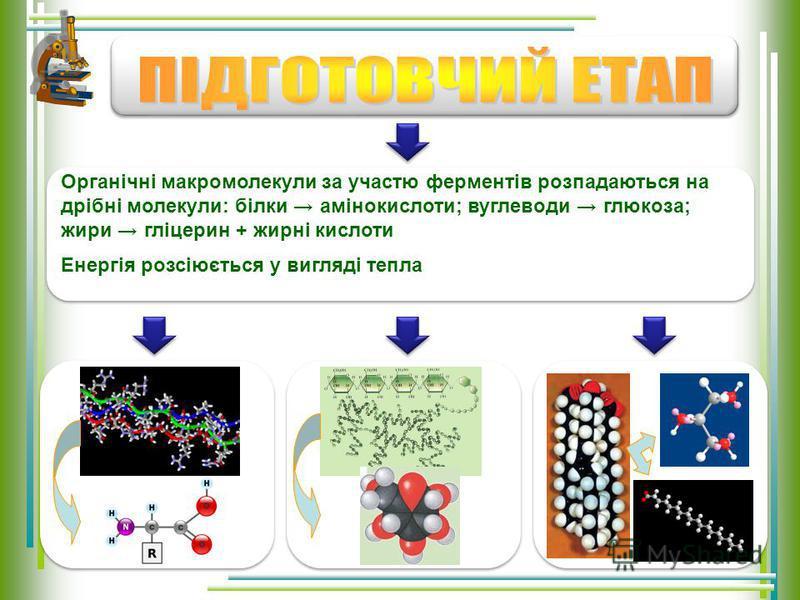 відбувається в шлунково-кишковому тракті та цитоплазмі клітин – органічні речовини під дією ферментів розщеплюються до мономерів відбувається в клітинах – мономери, які утворилися на попередньому етапі, зазнають подальшого багатоступеневого розщеплен