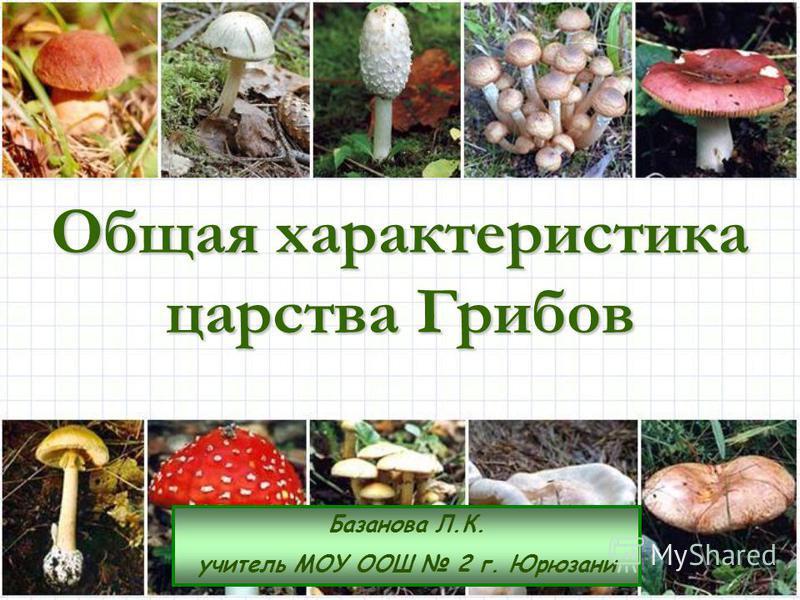 Общая характеристика царства Грибов Базанова Л.К. учитель МОУ ООШ 2 г. Юрюзани