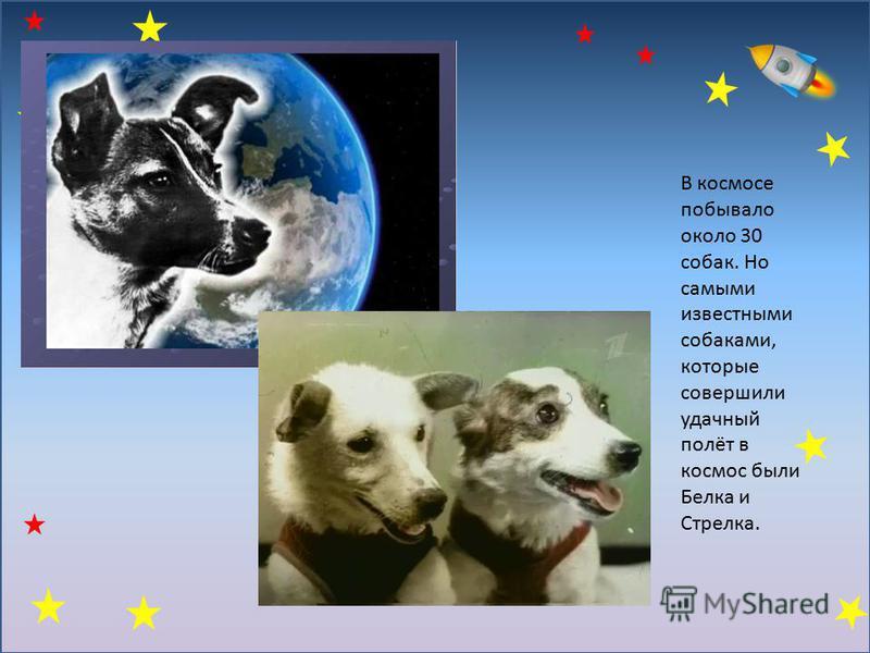 В космосе побывало около 30 собак. Но самыми известными собаками, которые совершили удачный полёт в космос были Белка и Стрелка.