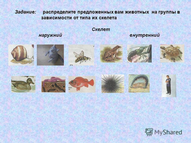 Задание: распределите предложенных вам животных на группы в зависимости от типа их скелета зависимости от типа их скелета Скелет наружный внутренний