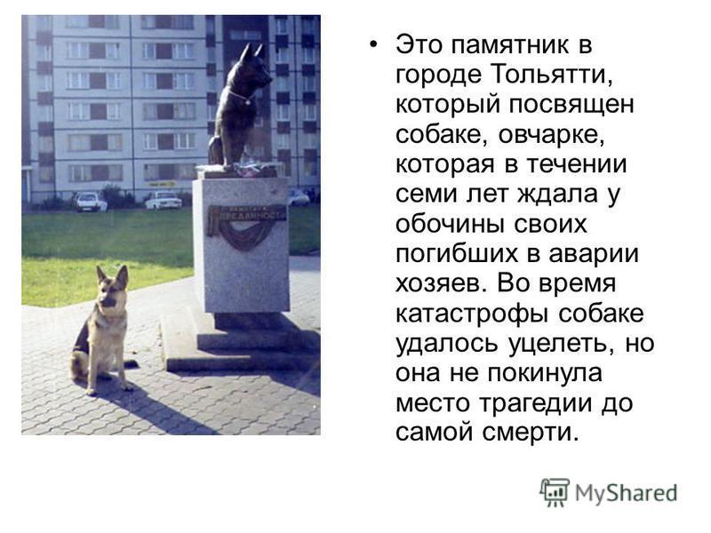 Это памятник в городе Тольятти, который посвящен собаке, овчарке, которая в течении семи лет ждала у обочины своих погибших в аварии хозяев. Во время катастрофы собаке удалось уцелеть, но она не покинула место трагедии до самой смерти.