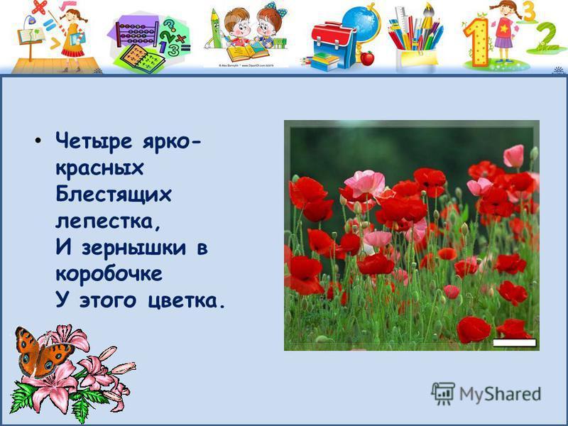 Четыре ярко- красных Блестящих лепестка, И зернышки в коробочке У этого цветка.