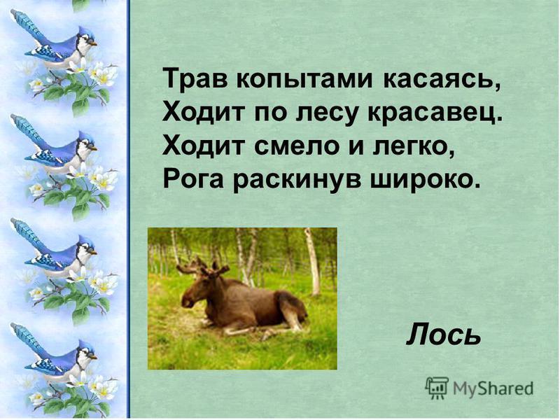 Трав копытами касаясь, Ходит по лесу красавец. Ходит смело и легко, Рога раскинув широко. Лось