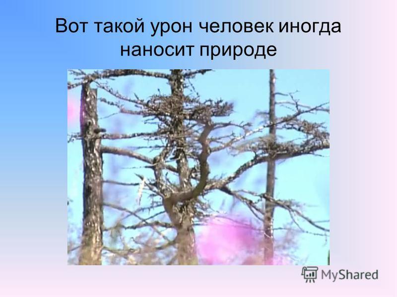 Вот такой урон человек иногда наносит природе