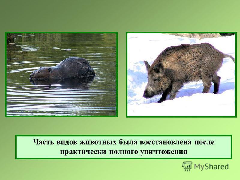Часть видов животных была восстановлена после практически полного уничтожения