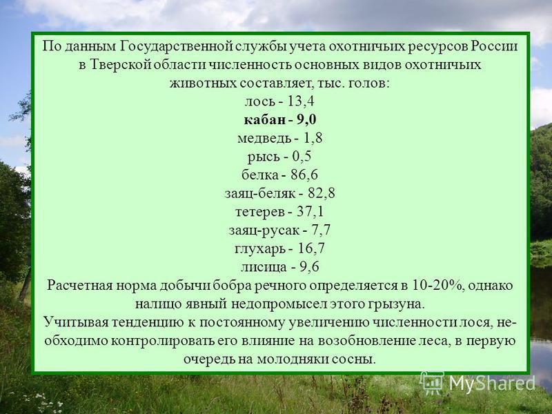 По данным Государственной службы учета охотничьих ресурсов России в Тверской области численность основных видов охотничьих животных составляет, тыс. голов: лось - 13,4 кабан - 9,0 медведь - 1,8 рысь - 0,5 белка - 86,6 заяц-беляк - 82,8 тетерев - 37,1