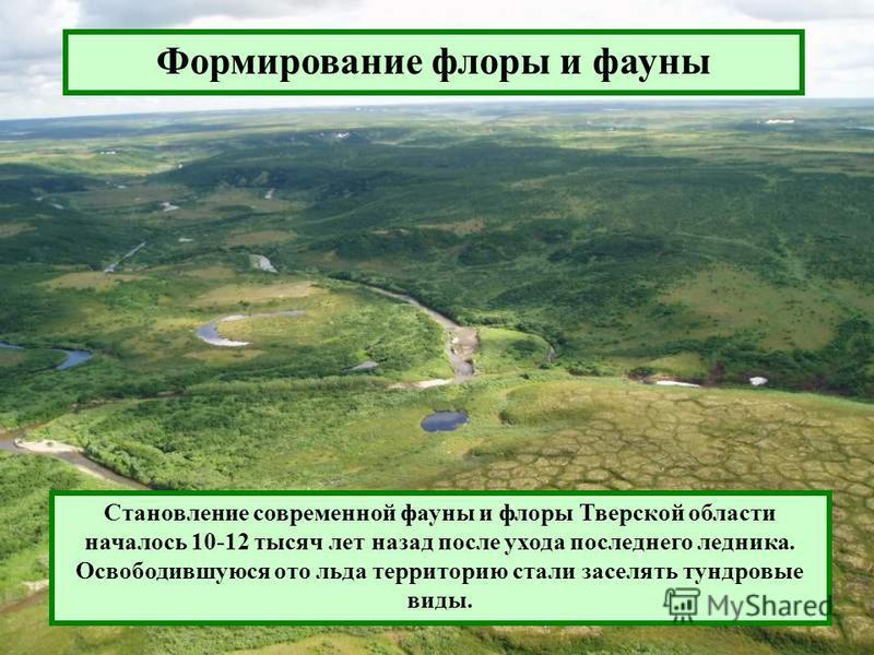 Формирование флоры и фауны Становление современной фауны и флоры Тверской области началось 10-12 тысяч лет назад после ухода последнего ледника. Освободившуюся ото льда территорию стали заселять тундровые виды.