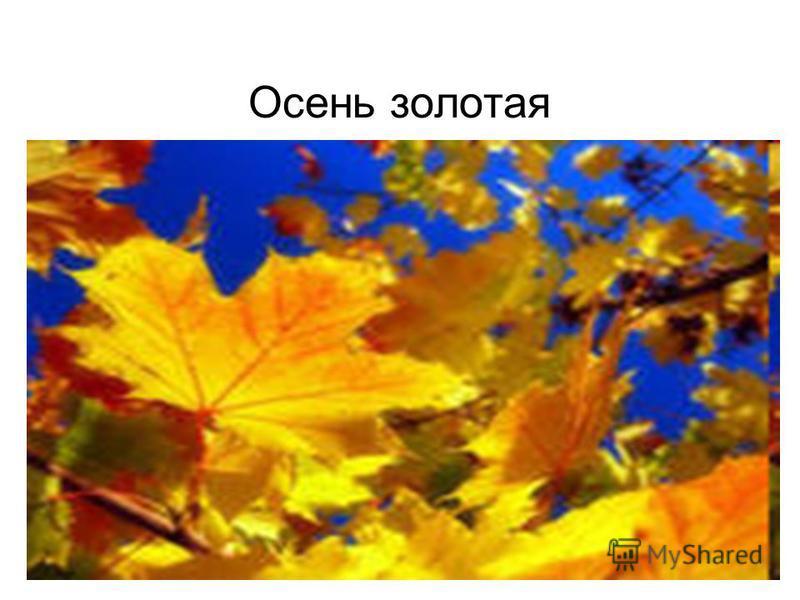Осень золотая
