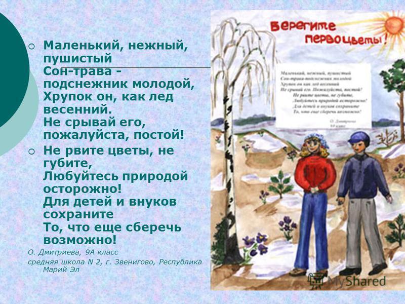 Маленький, нежный, пушистый Сон-трава - подснежник молодой, Хрупок он, как лед весенний. Не срывай его, пожалуйста, постой! Не рвите цветы, не губите, Любуйтесь природой осторожно! Для детей и внуков сохраните То, что еще сберечь возможно! О. Дмитрие