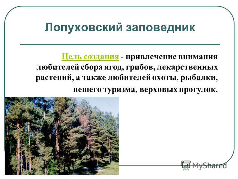 Лопуховский заповедник Цель создания - привлечение внимания любителей сбора ягод, грибов, лекарственных растений, а также любителей охоты, рыбалки, пешего туризма, верховых прогулок.