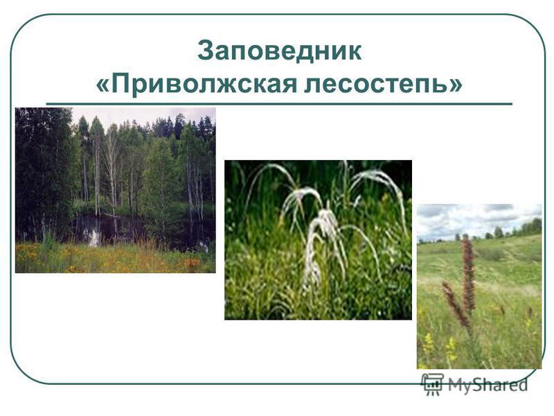 Заповедник «Приволжская лесостепь»