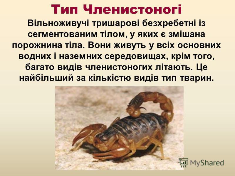 Тип Членистоногі Вільноживучі тришарові безхребетні із сегментованим тілом, у яких є змішана порожнина тіла. Вони живуть у всіх основних водних і наземних середовищах, крім того, багато видів членистоногих літають. Це найбільший за кількістю видів ти