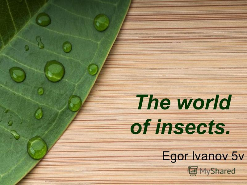 The world of insects. Egor Ivanov 5v