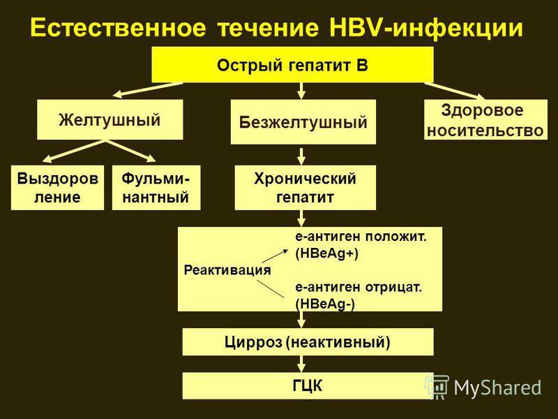 Естественное течение HBV-инфекции Острый гепатит В Желтушный Здоровое носительство Безжелтушный Выздоров ление Фульми- нантный Хронический гепатит е-антиген положит. (HBеAg+) Реактивация e-антиген отрицать. (HBeAg-) Цирроз (неактивный) ГЦК