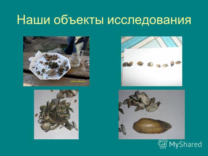 Наши объекты исследования
