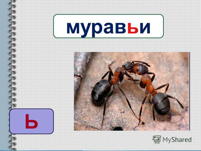 Ь муровьи