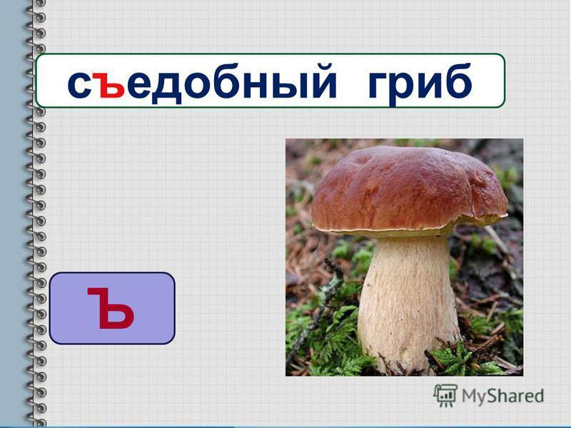 Ъ съсъедобный гриб