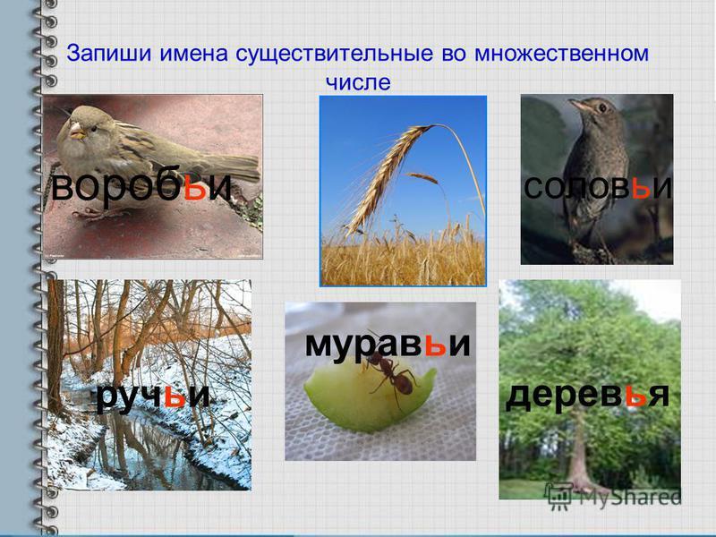 Запиши имена существительные во множественном числе воробьи колосья соловьи ручьи муровьи деревья