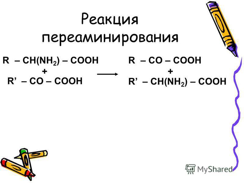 Реакция переаминирования R – CH(NH 2 ) – COOH R – CO – COOH + R – CH(NH 2 ) – COOH R – CO – COOH +