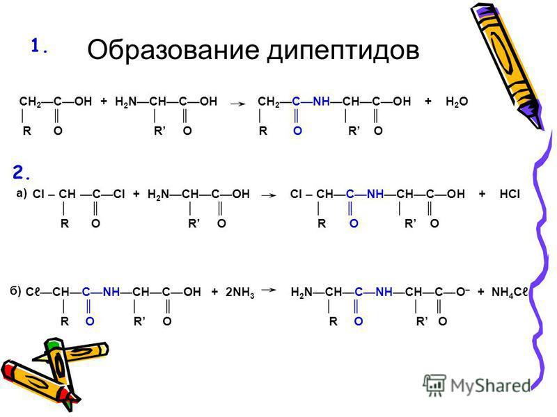 CH 2COH + H 2 NCHCOH CH 2CNHCHCOH + H 2 O R O R O R O R O СCHCNHCHCOH + 2NH 3 H 2 NCHCNHCHCO – + NH 4 С R O R O R O R O Образование дипептидов Cl – CH CCl + H 2 NCHCOH Cl – CHCNHCHCOH + HCl R O R O R O R O а) б) 2. 1.1.
