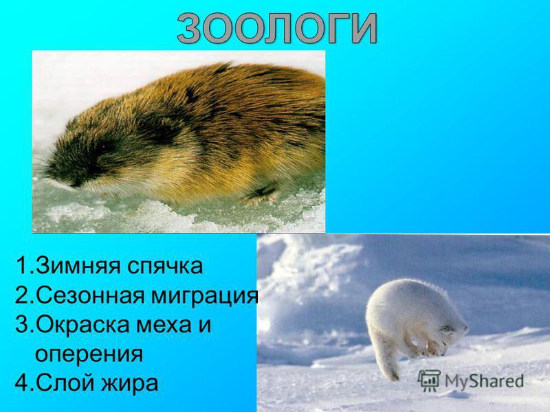 1. Зимняя спячка 2. Сезонная миграция 3. Окраска меха и оперения 4. Слой жира