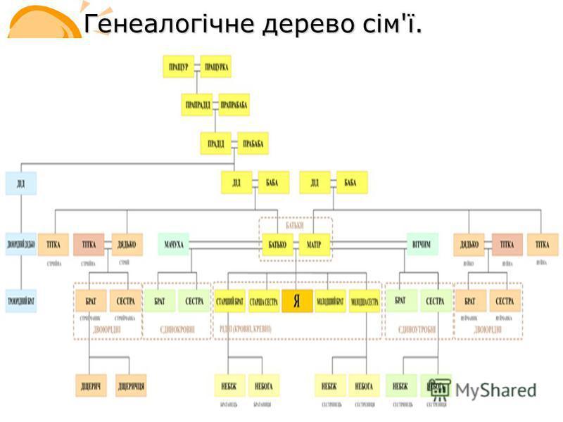 Генеалогічне дерево сім'ї.