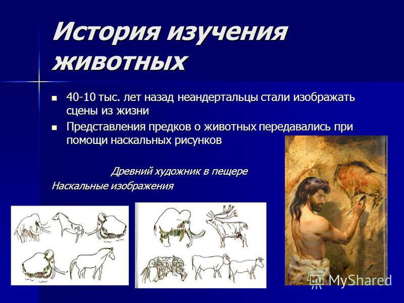 История изучения животных 40-10 тыс. лет назад неандертальцы стали изображать сцены из жизни 40-10 тыс. лет назад неандертальцы стали изображать сцены из жизни Представления предков о животных передавались при помощи наскальных рисунков Представления