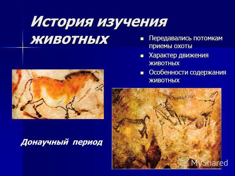 История изучения животных Передавались потомкам приемы охоты Передавались потомкам приемы охоты Характер движения животных Характер движения животных Особенности содержания животных Особенности содержания животных Донаучный период